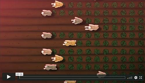 Darling Downs - Moreton Rabbits Board